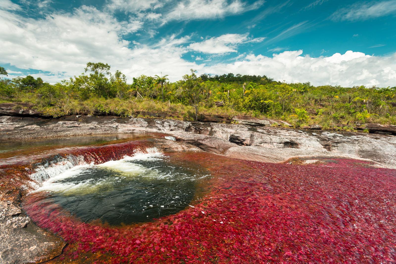 Caño Cristales (Colombia) El río más hermoso del mundo