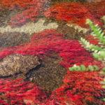 Planta acuática Macarenia Clavigera Caño Cristales  / Fotografía por Mario Carvajal