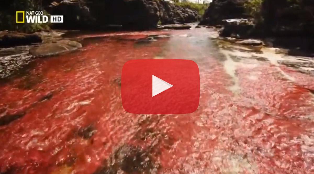 NatGeo Wild Colombia: Serranía de La Macarena, Caño Cristales, programa completo YouTube